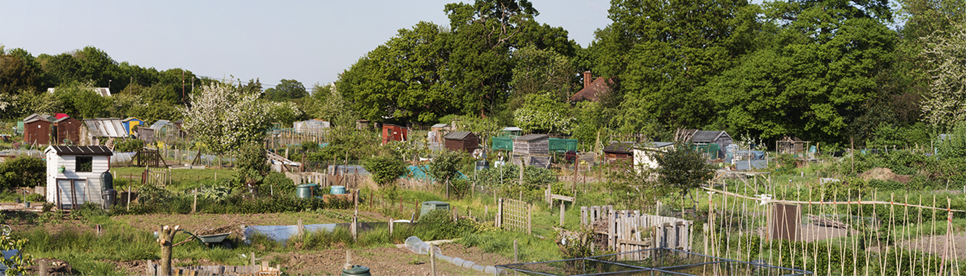 Ingatestone Allotments